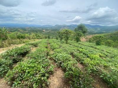 Nhà có lô đất vườn gần thành phố Bảo Lộc cần bán