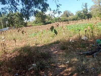 Mùa dịch bán lỗ lô đất gần ngay khu du lịch sinh thái Ea Kao, Thành Phố Buôn Ma Thuộc, Daklak. Giá chỉ 1,8 tỷ.